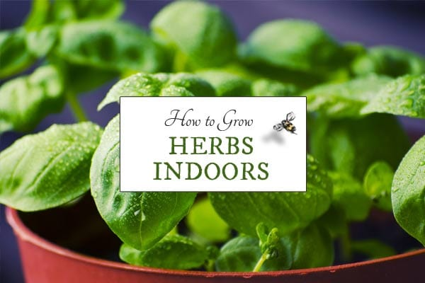 How to grow herbs indoors empress of dirt - Best herbs to grow indoors ...