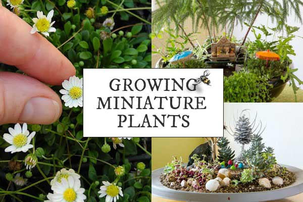 How to choose the best plants for miniature and fairy gardens.