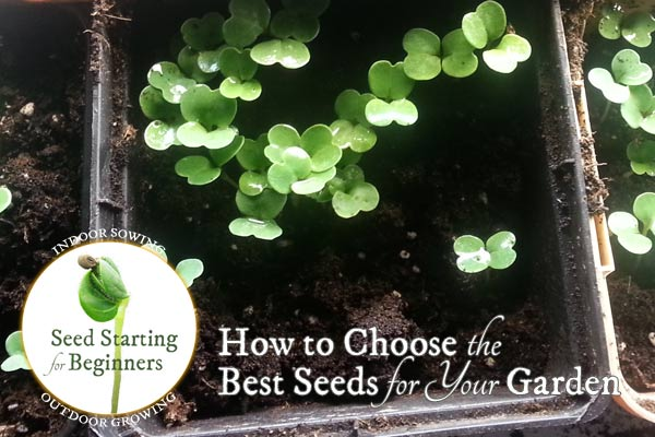 How to Choose the Best Seeds for Your Garden
