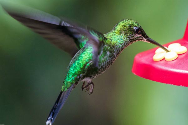 Do you know hummingbirds? Take the quiz and find out!