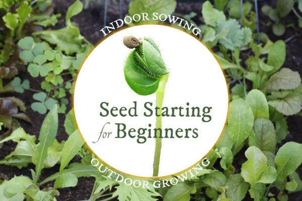 Seed Starting for Beginners: Sow Inside Grow Outside