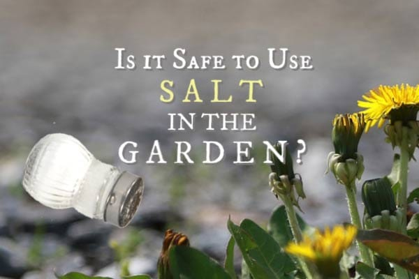 Is Salt a Good Weed Killer? What to Know First