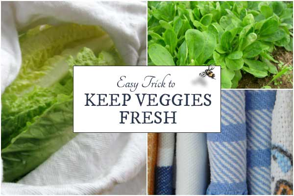 Easy Trick to Keep Vegetables Fresh and Crisp in the Fridge