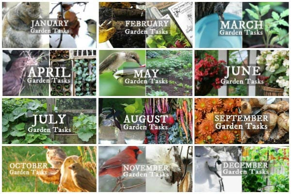 Ideas for monthly garden tasks to keep your garden in top shape.