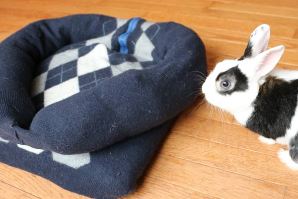 Make a Sweater Pet Bed for Dogs, Cats, and Bunnies