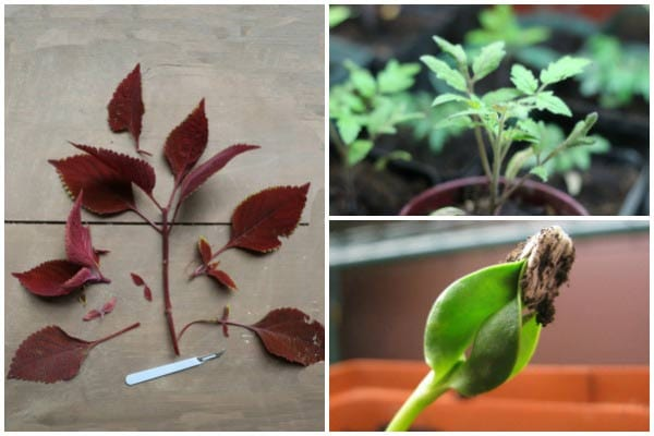 Getting Started with Plant Propagation | Seeds, Cuttings, and More