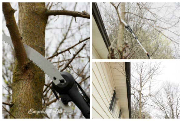 How to Safely Prune Hard-to-Reach Tree Branches