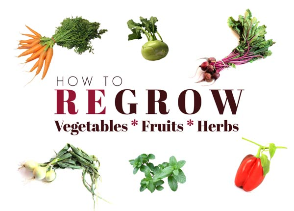 How to regrow vegetables from scraps.