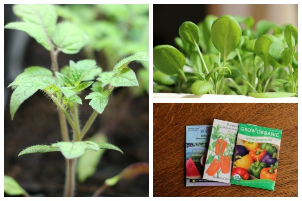 Easy Way to Track Indoor Seedlings Without Using Plant Tags