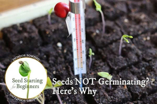 Seeds Not Germinating or Growing Well? Here's Why