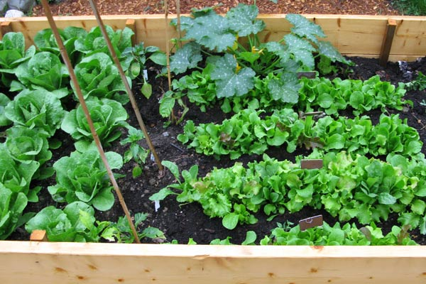 10 Smart Reasons to Use Raised Beds in Your Garden