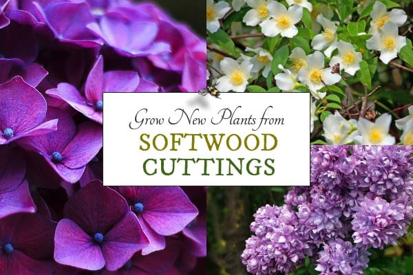 Grow New Plants from Softwood Cuttings | Printable