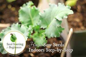 How to Sow Seeds Indoors Step-by-Step