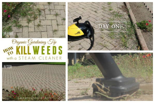 How to remove weeds with a steam cleaner.