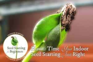 How to Time Your Indoor Seed Starting Just Right