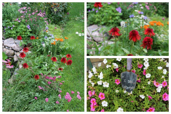 Simple tip for knowing which flowers in your garden have the best seeds for seed saving.