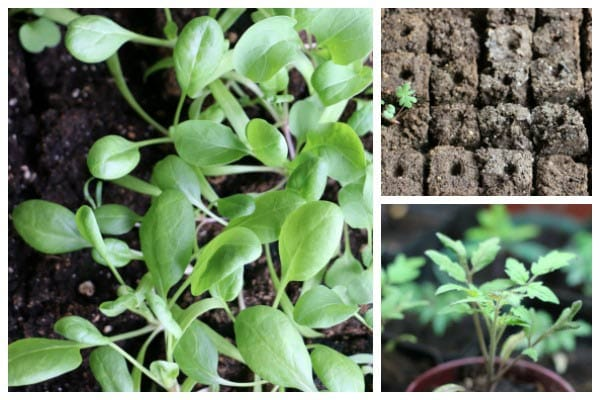 Some seed types germinate best in warmer soil. See these tips and household hacks shared by resourceful gardeners for warming seed trays to help speed up and increase germination rates.