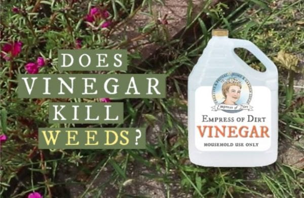 Does Vinegar Really Kill Weeds?