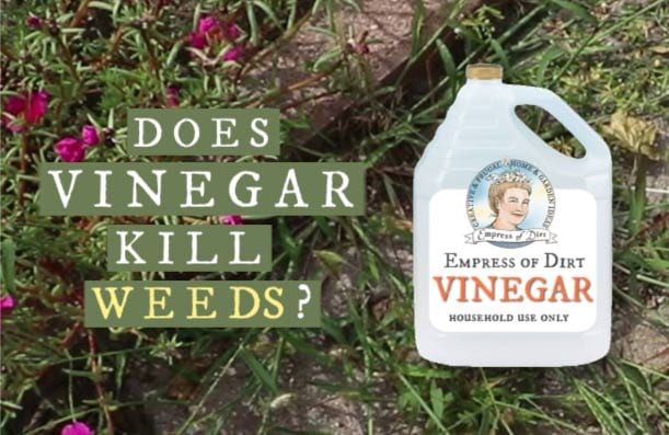 Does vinegar kills weeds. Find out what the facts show.