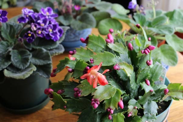 Houseplants Archives Page 3 Of 4 Empress Of Dirt