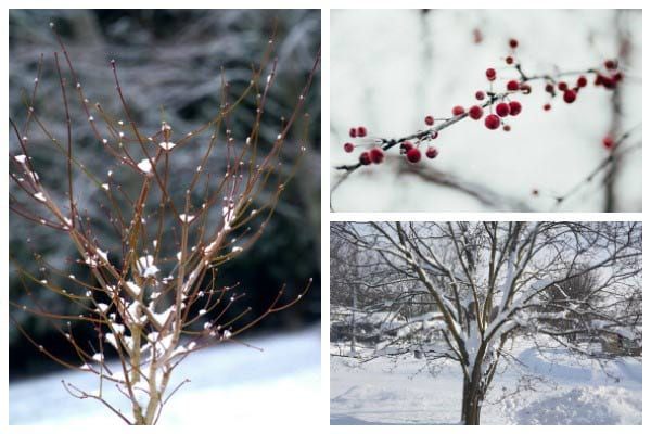 What to prune in winter plus tips for best results.