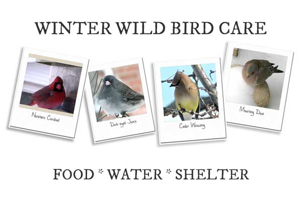 Winter Wild Bird Care