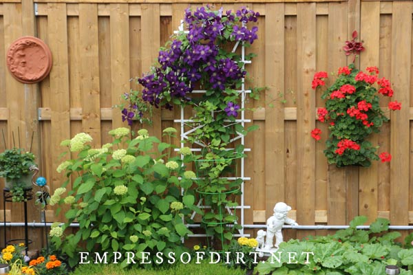 Tips for choosing trellis for clematis vines.