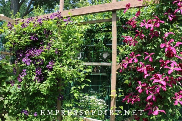 A large arbor with pink and purple clematis vines.