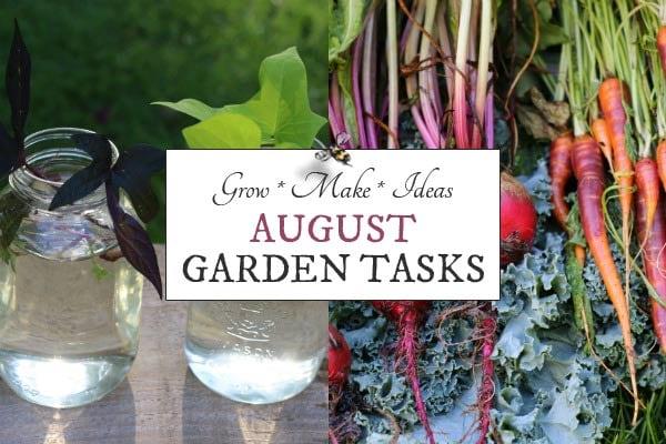 August Garden Tasks