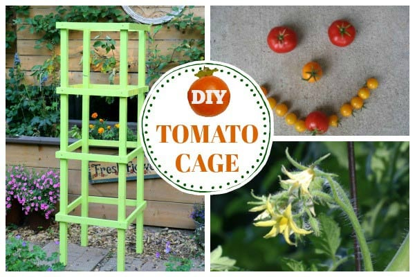 How to make tomato cages from wood.