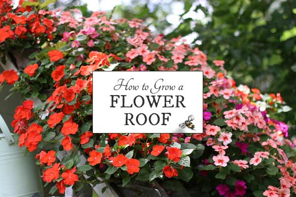 How to Grow a Flower Roof or Wall
