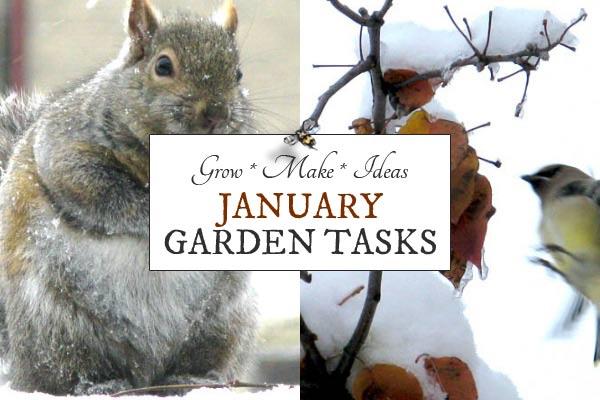 January Garden Tasks