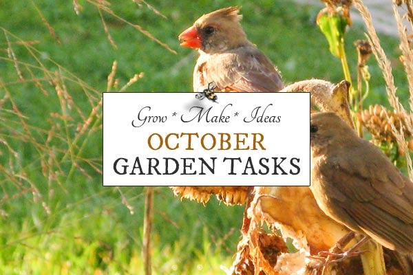 October Garden Tasks