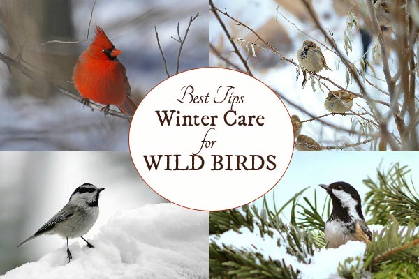 Winter Care for Wild Birds | Food, Water, and Shelter