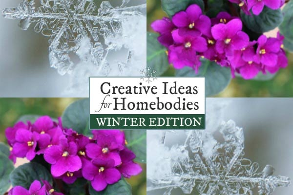Creative Winter Ideas for Homebodies