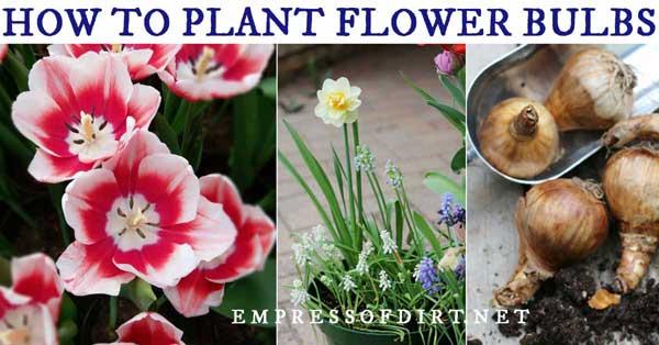 Flowering bulbs and blooms.