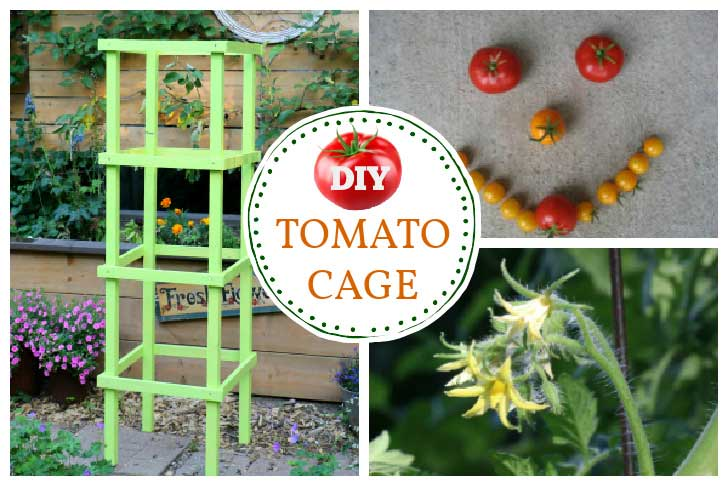 Homemade wooden support cage for tomato plants