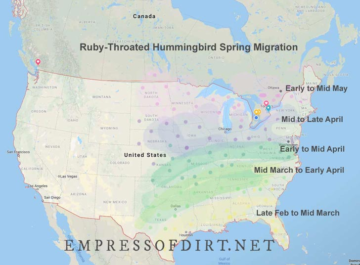 Ruby throated hummingbird migration map with estimated arrival dates in spring.