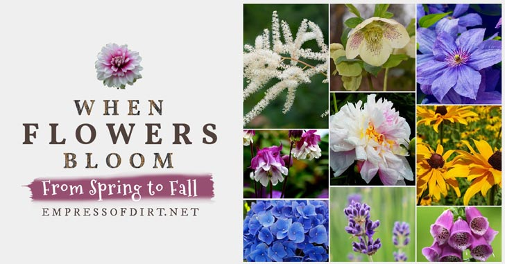 Collage of flowers including columbine, clematis, and peonies.