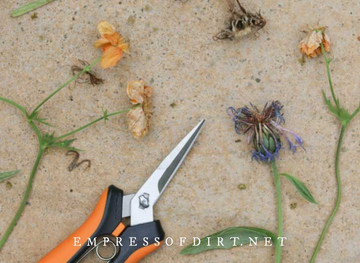 Old flower blooms and a pair of garden snippers.