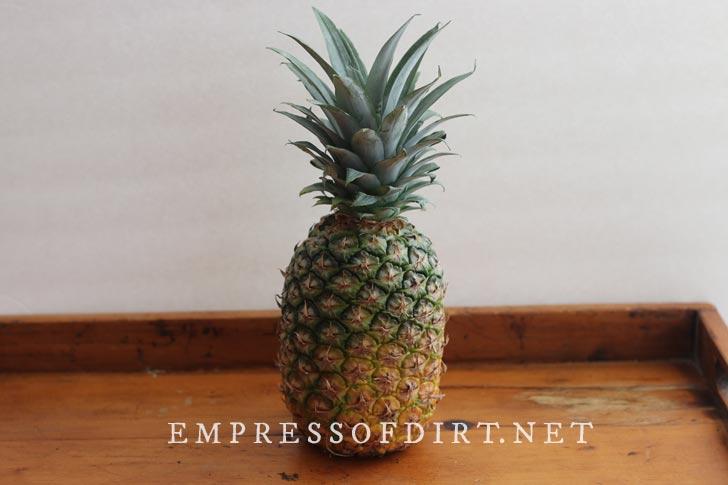 Ripe pineapple.