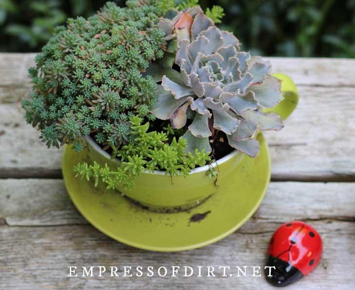 Succulent teacup planter