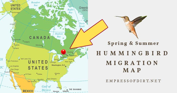 Hummingbird and a North American migration map.