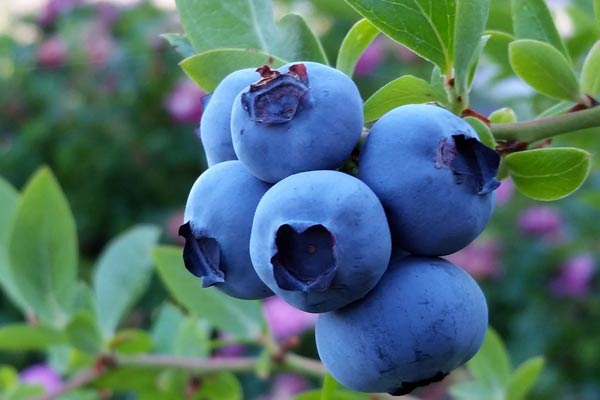 Top tips for growing fruit and berries in a home garden, in containers and in-ground.