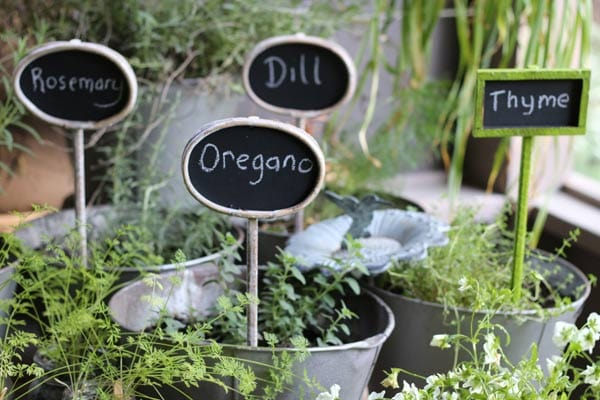 Tips for growing herbs in home gardens.