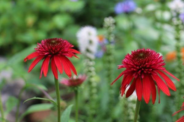 Flower Growing Tips for Gardeners