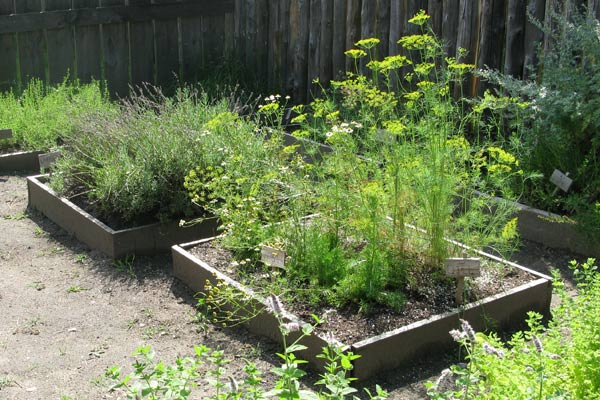 Raised Garden Bed Tips and Projects