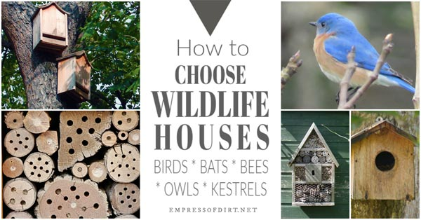 Choosing houses for wildlife including birds, bees, bats, and owls.