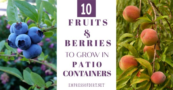 Fruit trees and berry bushes for containers.