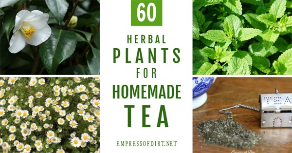List of plants to grow for homemade tea.